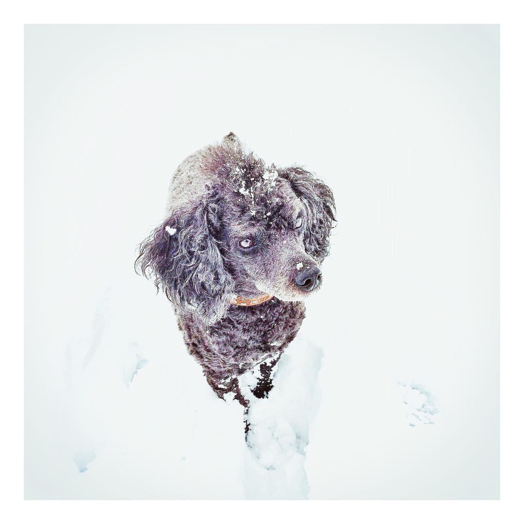 snowmax