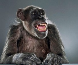 monkey-portrait-jill-greenberg-17